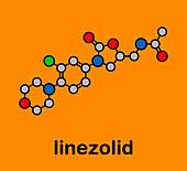 Linezolid antibiotic drug, molecular model