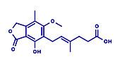 Mycophenolate immunosuppressive drug, molecular model