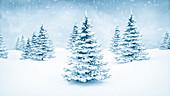Winter landscape and fir trees, illustration