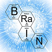 Chemical elements brain, illustration
