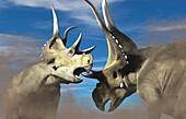 Diabloceratops dinosaurs fighting, illustration
