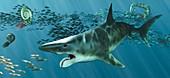 Helicoprion prehistoric fish, illustration