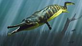 Prionosuchus prehistoric amphibian, illustration