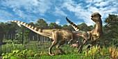 Stegoceras dinosaurs fighting, illustration