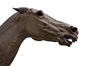 Artemision Bronze horse head