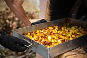 Backform mit Kartoffeln aus dem Ziegelofen nehmen