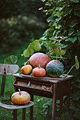 Pumpkin autumn harvest