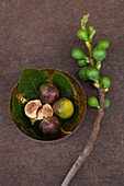 Figs with fig leaves in a small bowl next to a branch with unripe figs
