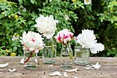 Weiße Pfingstrosenblüten in Gläsern