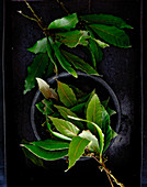 Fresh bay leaves on a black background