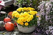 Chrysantheme 'Rico Yellow' im Korb, Aster 'Calliope' und Hokkaido-Kürbisse