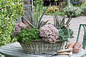 Korbkasten mit Sukkulenten bepflanzt: Aloe vera, Polster-Fetthenne 'Pure Joy', Mauerpfeffer und Tripmadam