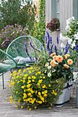 Holzkübel mit Zweizahn, Dahlie, Mehlsalbei, Gras und Zinnie, moderne Sessel
