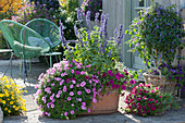 Terrasse mit Petunien, Mehlsalbei, Enzianbaum unterpflanzt mit Zauberglöckchen, Zweizahn, moderne Sessel