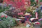 Sitzplatz im Herbstgarten am Beet mit Aster, Dahlie, Rispenhortensie, Herbstanemone, Spindelstrauch und Federborstengras, Hund Zula