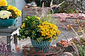 Türkise Gefäße bepflanzt mit Chrysanthemen, Johanniskraut 'Magical White' 'Magical Red' und Federborstengras, Zweig mit Hagebutten und Kranz aus Clematisranke als Deko