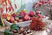 Herbst Stilleben mit Äpfeln, Walnüssen, Kastanien und Strauß aus Hagebutten