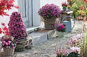 Chrysantheme Dreamstar 'Pan Lilac', 'Cupido' als Pyramide gezogen, Ranken vom wilden Wein als Manschette, Knospenheide, Alpenveilchen und Stiefmütterchen
