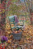 Korb mit Äpfeln neben Bank im herbstlichen Garten