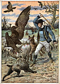 Eagles attack sheep, illustration
