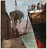 Elephant lifting, illustration