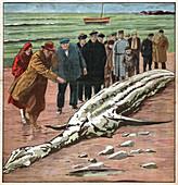 Sea monster, illustration