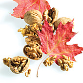 Maple leaves with Walnuts