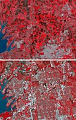 Urban sprawl in Texas, USA, infrared satellite images