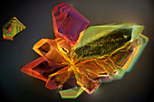 Sugar crystals, light micrograph