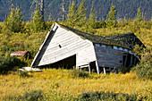 Collapsed barn due to permafrost melt, Alaska, USA