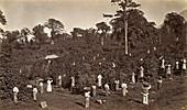 Coffee harvesting in Guatemala, 1875
