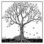 Tree in autumn, illustration