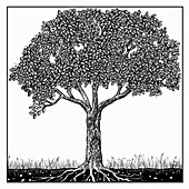 Tree in summer, illustration