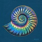 Fossil Asteroceras ammonite, illustration