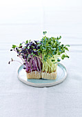 Green and purple cress