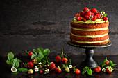 Pistachio tiramisu cake with fresh strawberries