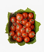 Freshly washed cherry tomatoes on leaves in a basket