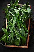 Fresh wild garlic in a box