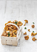 Fresh chanterelles in a chip basket with parsley