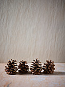 Dry pine cones against a grey background