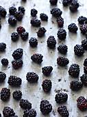 Blackberries on baking sheet