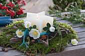 Sternkerze im Holzstern auf Moos, Christrosen-Blüten als Deko