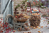 Herbst-Terrasse mit Brombeere, Hagebutte, Kränze aus Clematisranken, Korb mit Gräsern und Hagebutten und Drahtkorb mit Herbstlaub
