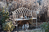 Hund Zula sitzt vor Bank im winterlichen Garten