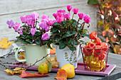 Alpenveilchen in emaillierten Milchtöpfen, dekoriert mit Lampions, Herbstlaub und Zierquitten