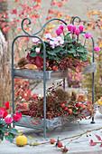 Etagere mit Alpenveilchen, Hagebutten, Maronen und Herbstlaub dekoriert