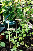 Pflanzen im Mini-Garten mit Wäscheklammern als Etiketten