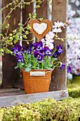 Hornveilchen 'Violet Blue' mit Herz-Dekostecker in Eimerchen