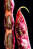 A red runner bean