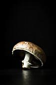 A fresh mushroom